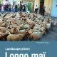 Schwab_Longo Mai_UG.indd